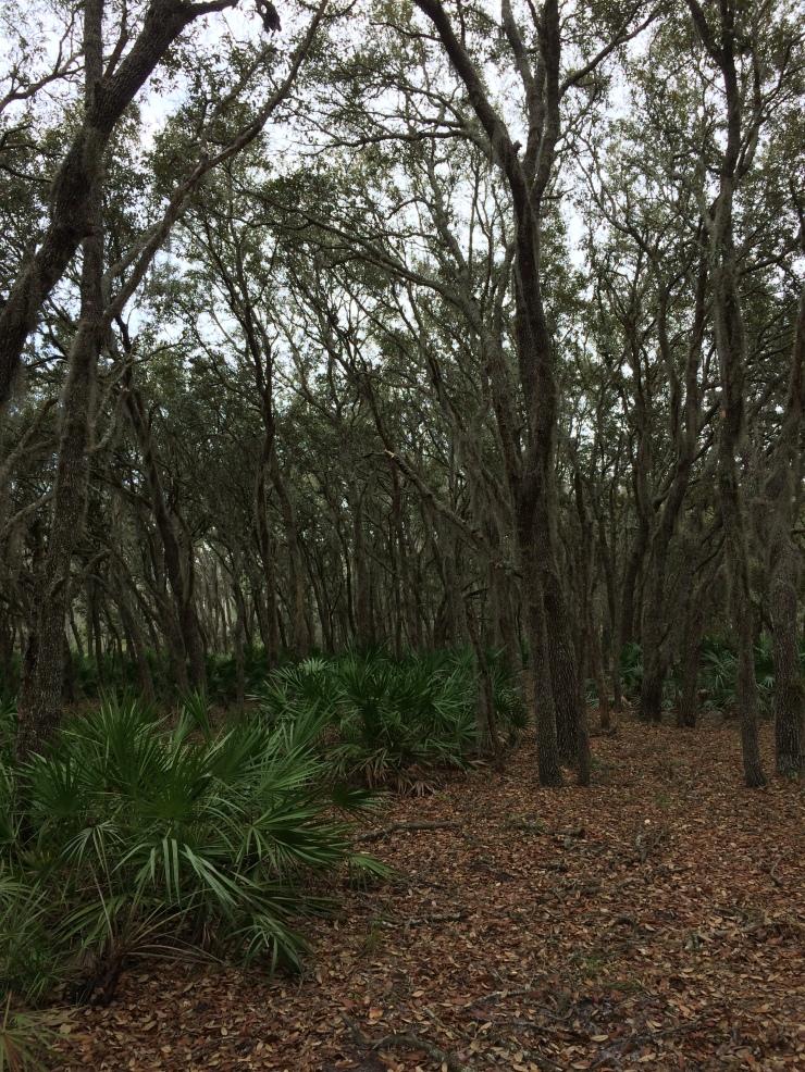 DWD Green Swamp